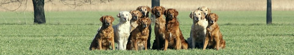 Deutscher Retriever Club e.V.